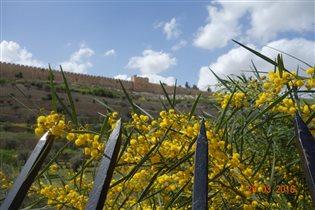Март в Иерусалиме