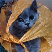 Кот и пакет.