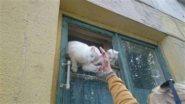 Белянки в окне