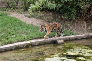 Большая 'киса'. Пражский зоопарк.