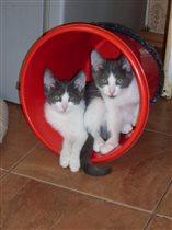 Два брата акробата:) Мио и Герман