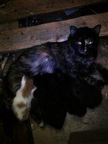 Кошечка со своими детками - котятами...