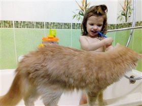 Мастер-класс для кота