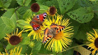 Блиц: насекомые. Бабочки