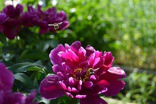 На душистый cел цветок,  подкрепился…  Был таков!