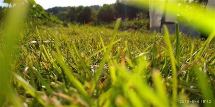 По зелёной траве
