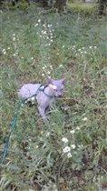 Котик на прогулке