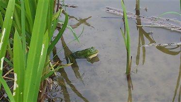 Ну, очень зелененькая:)