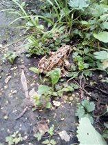 Царевна-лягушка. Битцевский парк. Июль 2018