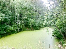 Все оттенки зеленого