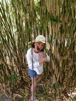 Летняя бамбуковая диета