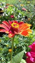 Красивый цветочек