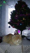 Боня и елка