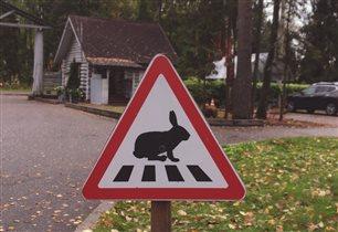 Внимание! Зайцы в городе!