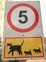 снизьте скорость! здесь гуляют кошки!