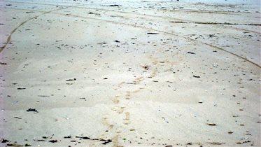 Песок, по которому ты ходила