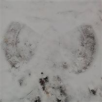 Ангелы тоже оставляют следы😇