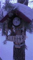 зимняя столовая для птиц готова к открытию