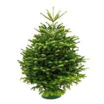 Яндекс.Лавка доставит новогоднюю елку