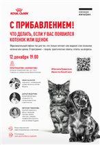 Котята и щенки – паблик ток о том, как сделать все правильно, став владельцем питомца