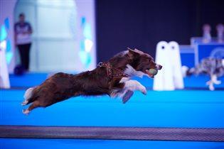 РКФ приглашает на самую крупную выставку собак