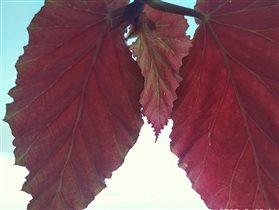 Солнце в листьях!