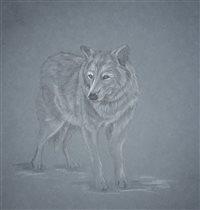 Белая волчица из Московского зоопарка