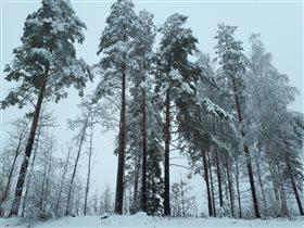 9 апреля, берег финского озера Сайма