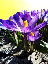 Яркий цвет весны
