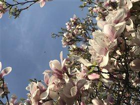Цвет апреля