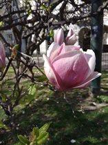 Первые апрельские дни на севере Италии