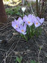 Весна , как и цветы - лишь мгновение ...