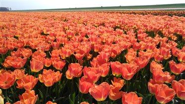 Апрель в Голандии!!!