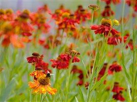 прекрасное цветочное поле