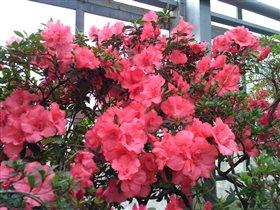 Красные цветы в Оранжерее