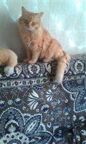 Наш любимый Персик на отдыхе с собачкой.