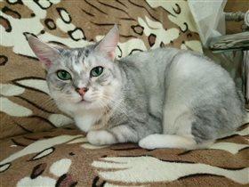 Блиц: милые котики