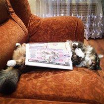Наш котик Том очень любит 'читать'