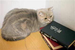 Моя Эрика в библиотеке.