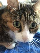 Кошка, по имени Кошка)