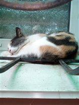 Кошка на окошке.