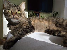 Наша любимая Кошка Тошка