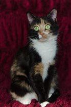 Кошка Люся