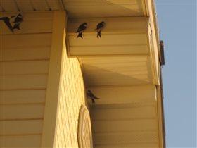 Ласточки под крышей дома моего.