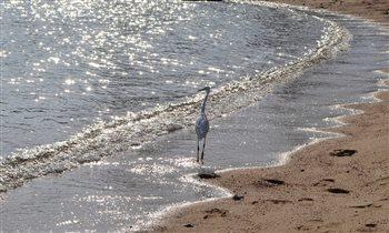 Блиц: птички. Хозяйка пляжа