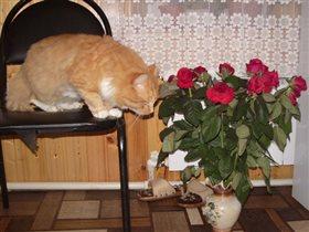 Розы должны пахнуть КОЛБАСОЙ