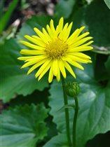 желтое солнышко в саду