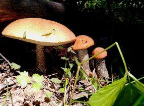 «Блиц: грибное царство» Дружная семейка
