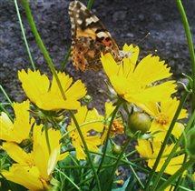 Бабочка прилетела