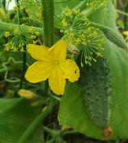 И чем я хуже желтой лилии ?:)